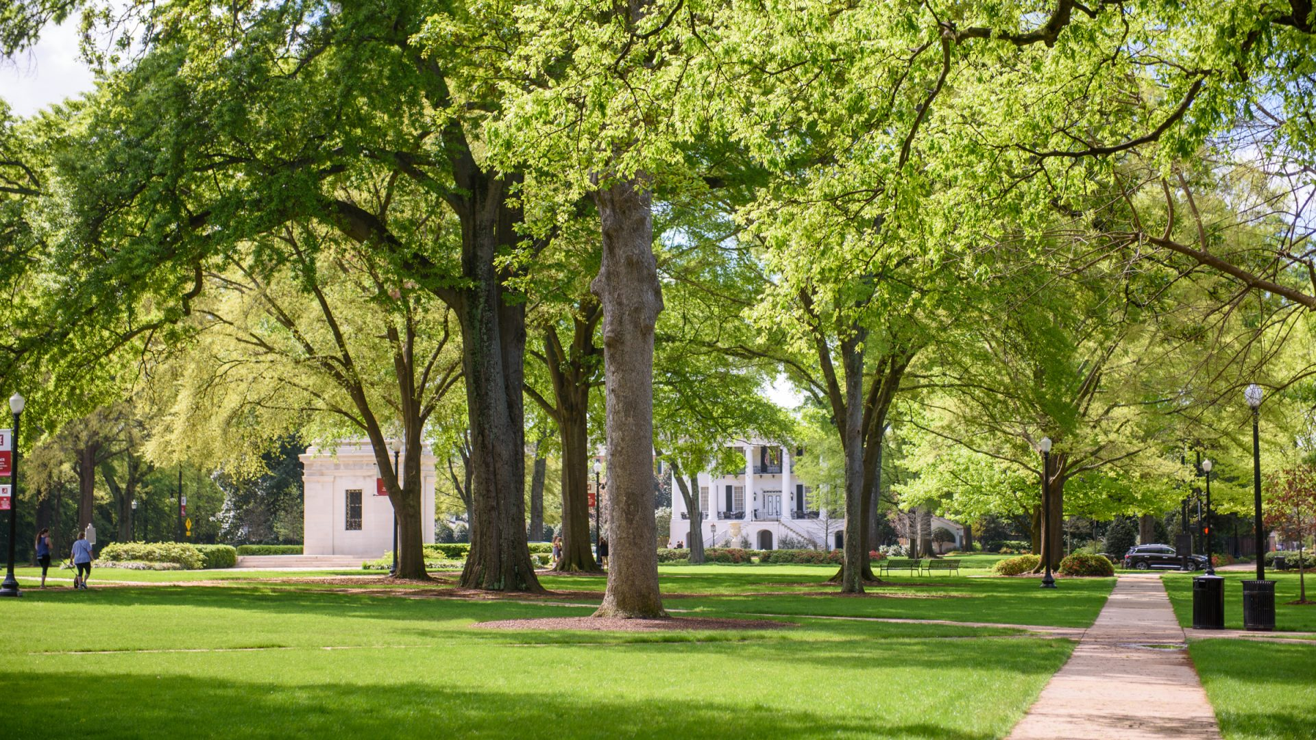 Campus Photo of UA Quad Trees
